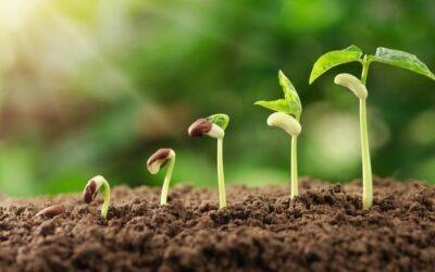 Producción de semillas: ¿cómo funciona y cuáles son sus métodos?