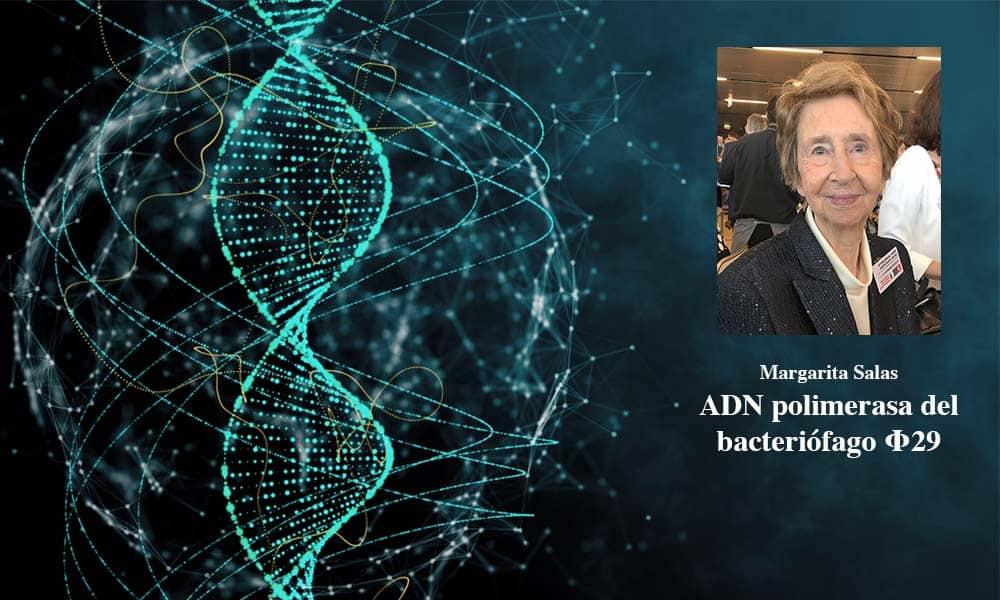 Margarita Salas halló la ADN polimerasa del virus bacteriófago Φ29