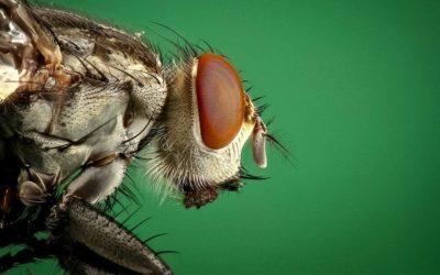¿En qué consiste un control de plagas?