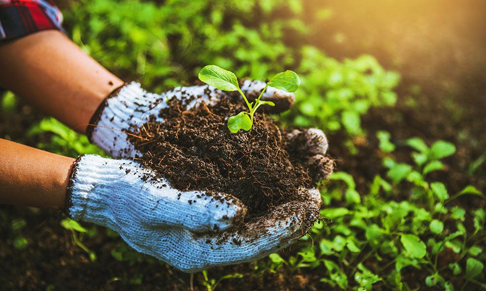 Cultivos en casa | La Guía