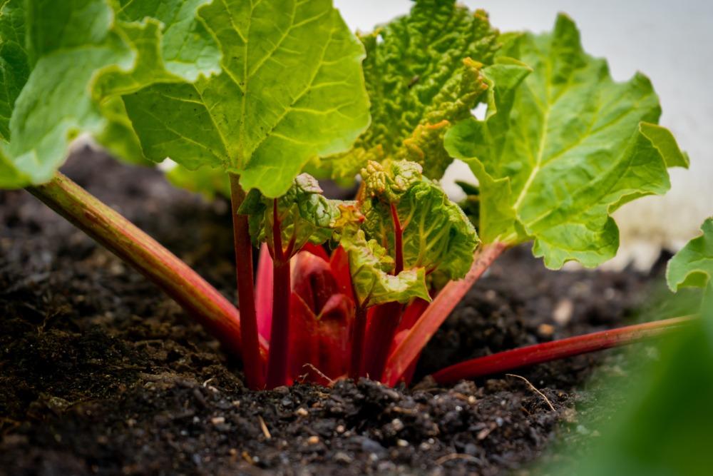 ¿Qué son los cultivos herbáceos y cómo se clasifican?