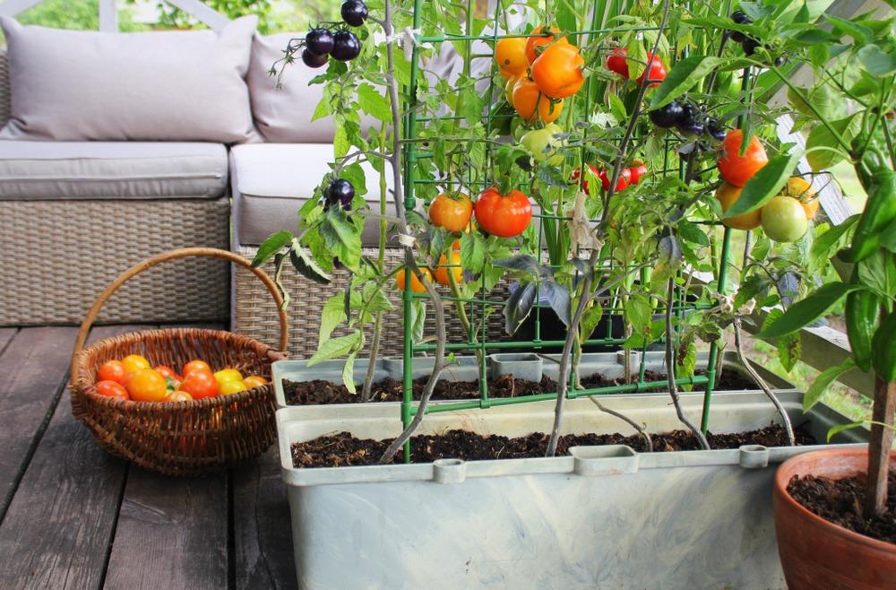 Huerto en casa: beneficios y pasos a seguir