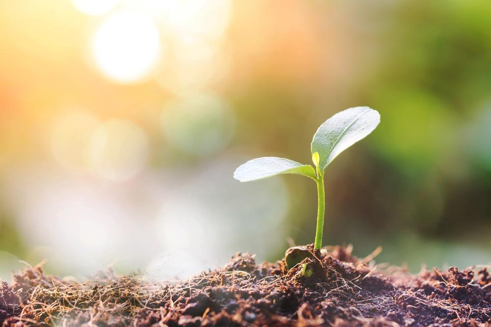Agricultura biológica: qué es y cuáles son sus ventajas